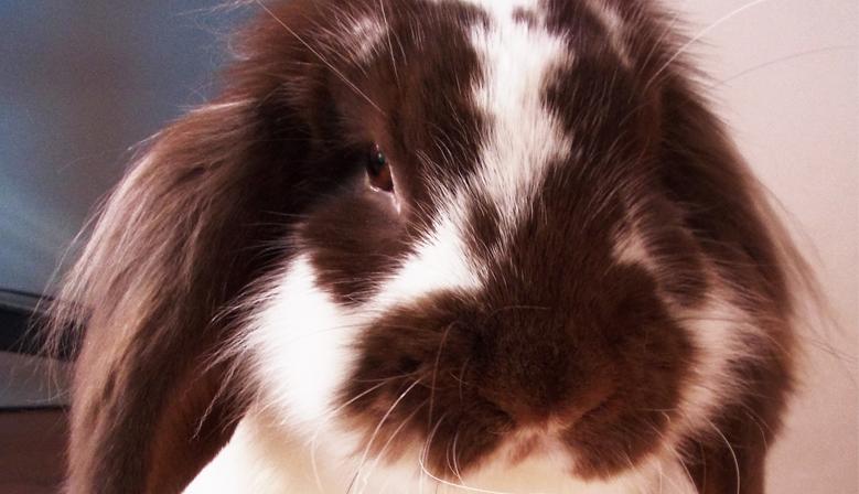 Conigli e Criceti
